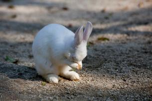 ウサギの写真素材 [FYI01556591]