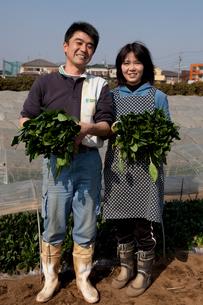 収穫したホーレンソウを持つ農家の写真素材 [FYI01556602]