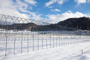 雪に埋まったハウス畑の写真素材 [FYI01556724]