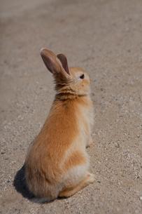 ウサギの写真素材 [FYI01556726]