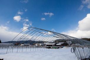 雪に埋まったハウス畑の写真素材 [FYI01556736]