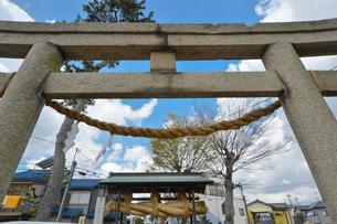 赤城神社鳥居と大しめ縄の写真素材 [FYI01556875]