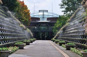 とっとり花回廊 園内霧の庭園の写真素材 [FYI01556929]