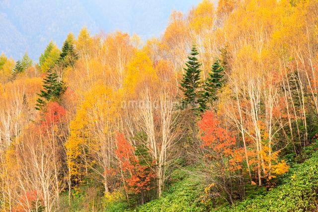 紅葉した樹々の写真素材 [FYI01556991]