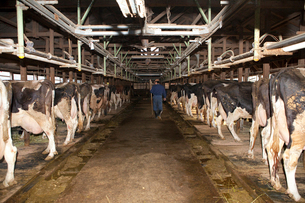 酪農家 牛舎と酪農家の写真素材 [FYI01557066]