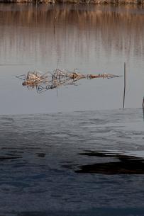凍りつく手賀沼の朝の写真素材 [FYI01557074]