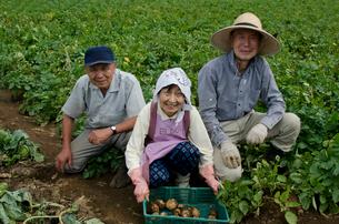 ジャガイモを収穫するの写真素材 [FYI01557242]