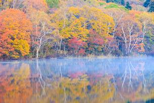 秋の小鳥ヶ池の写真素材 [FYI01557324]