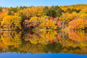 秋の小鳥ヶ池の写真素材 [FYI01557571]