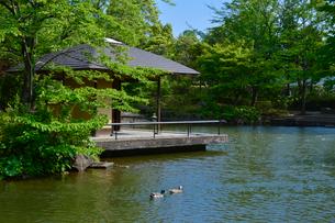 柏の葉公園の日本庭園のアズマヤとカモの写真素材 [FYI01557867]