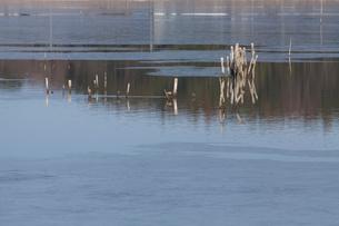 凍りつく手賀沼の朝の写真素材 [FYI01558038]