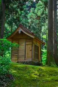 北陸の苔寺と呼ばれる平泉寺白山神社の写真素材 [FYI01558301]