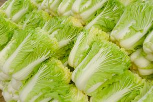 伝統野菜花芯山東菜の写真素材 [FYI01558326]