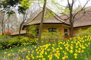 アンデルセン公園 スイセンとデンマーク風建物の写真素材 [FYI01558402]