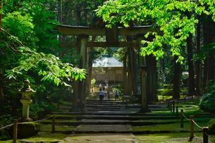 北陸の苔寺と呼ばれる平泉寺白山神社の写真素材 [FYI01558509]