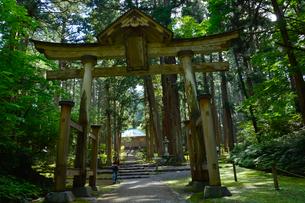 北陸の苔寺と呼ばれる平泉寺白山神社の写真素材 [FYI01558610]