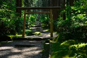 北陸の苔寺と呼ばれる平泉寺白山神社の写真素材 [FYI01558680]