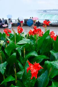 ナイアガラ・フォールズパークのカンナと観光客の写真素材 [FYI01558727]