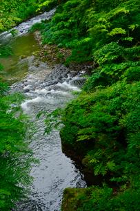 こおろぎ橋から見た鶴仙渓の写真素材 [FYI01558744]