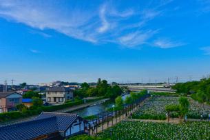 潮来あやめ祭り会場のあやめ園の写真素材 [FYI01558951]