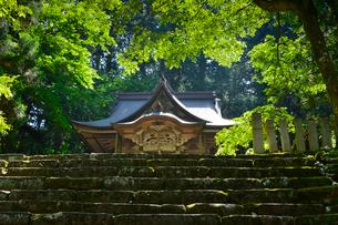 北陸の苔寺と呼ばれる平泉寺白山神社の写真素材 [FYI01558992]