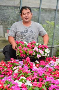 花の手入れをする花木農家の写真素材 [FYI01559010]