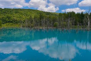 人造湖 白金の青い池の写真素材 [FYI01559097]