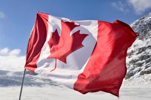 コロンビア大氷原とカナダ国旗の写真素材 [FYI01559199]