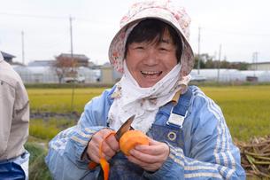農作業の合間に柿を剥くの写真素材 [FYI01559362]