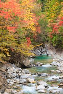 阿寺渓谷と紅葉の写真素材 [FYI01559440]