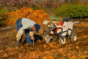ナガイモの収穫の写真素材 [FYI01559452]
