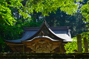 北陸の苔寺と呼ばれる平泉寺白山神社の写真素材 [FYI01559476]