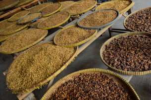 最高級コーヒーのコピ・ルアック(ジャコウネココーヒー)製造所の写真素材 [FYI01559490]