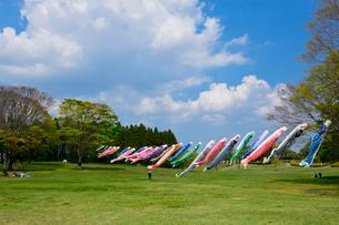 昭和の森のコイノボリの写真素材 [FYI01559600]