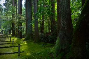 北陸の苔寺と呼ばれる平泉寺白山神社の写真素材 [FYI01559658]