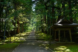 北陸の苔寺と呼ばれる平泉寺白山神社の写真素材 [FYI01559684]