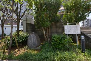 太宰治が植えた夾竹桃がある市民文化ホール・中央公民館の写真素材 [FYI01559732]