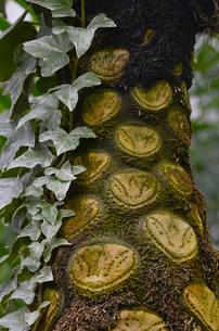 清水公園のマルハチの写真素材 [FYI01559889]