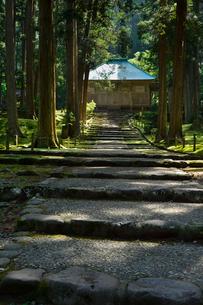 北陸の苔寺と呼ばれる平泉寺白山神社の写真素材 [FYI01559906]