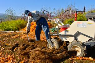 ナガイモの収穫の写真素材 [FYI01559936]