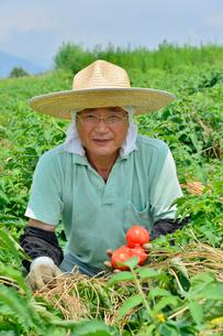 加工用トマトの収穫の写真素材 [FYI01559959]