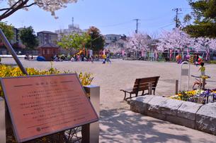 駒込が染井よしのサクラ発祥の地を表す説明板のある公園の写真素材 [FYI01559960]