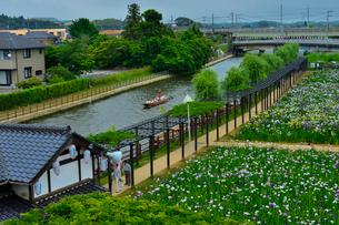 潮来あやめ祭り会場と花見客の写真素材 [FYI01560059]