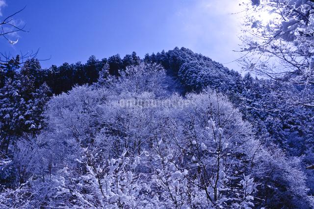雪景色の山の写真素材 [FYI01560177]