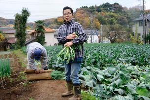 収穫したブロッコリーを持つ農婦の写真素材 [FYI01560179]