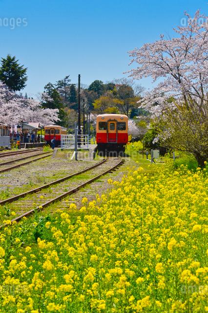 小湊鉄道里見駅付近を走る電車の写真素材 [FYI01560216]