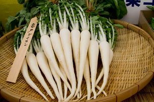 江戸野菜 亀戸ダイコンの写真素材 [FYI01560244]