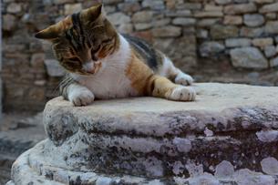 エフェソス遺跡群とネコの写真素材 [FYI01560308]