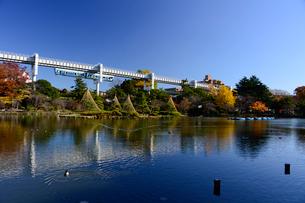 千葉公園の紅葉と雪つりとモノレールの写真素材 [FYI01560353]