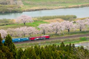 船岡城址公園から見た一目千本桜と列車の写真素材 [FYI01560438]